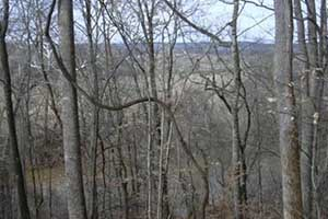 Hunting land in Fluvanna County VA