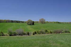 Louisa County Virginia Farm for sale