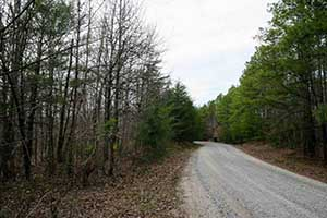 Buckingham  County Land for sale