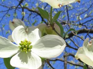 flower-670279_1280