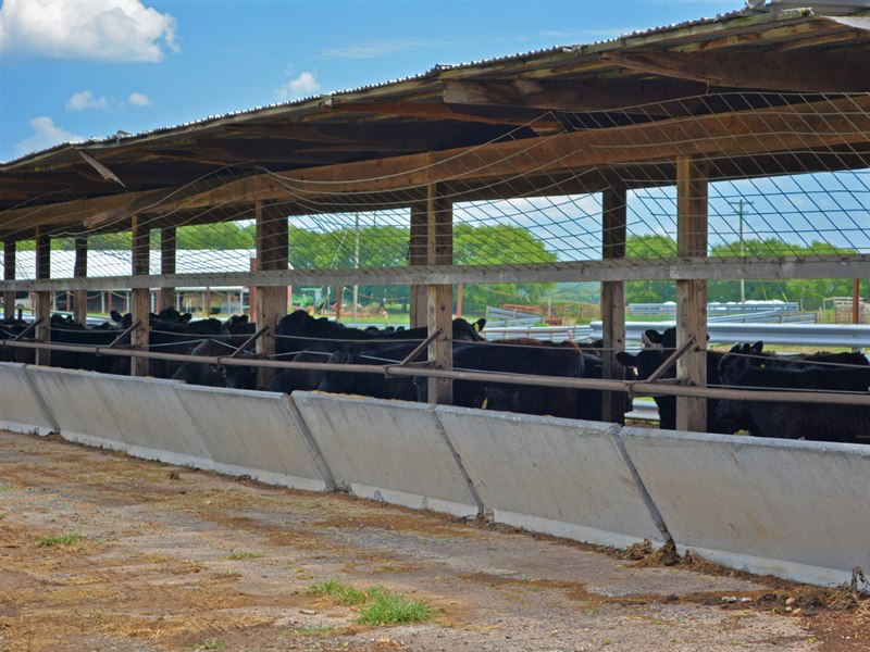 Glenwood Farm Cattle Farm For Sale In Virginia