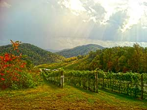 Charlottesville Vineyards and Wineries